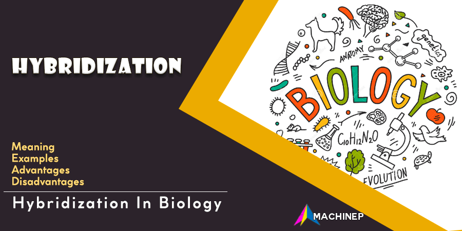 Meaning, Examples, Advantages & Disadvantages of Hybridization in Biology