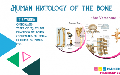 Human Histology of the Bone